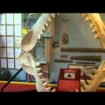 Vic Hislop Shark & Whale Expo, Hervey Bay